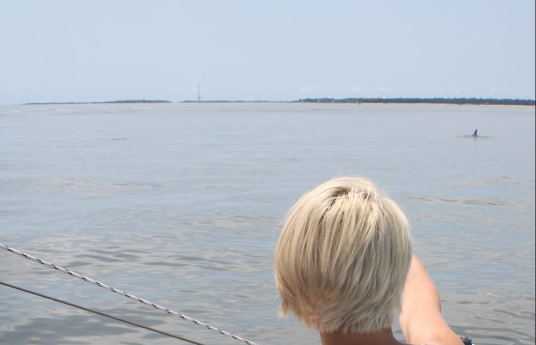 Dolphin Harbor Sail Slider
